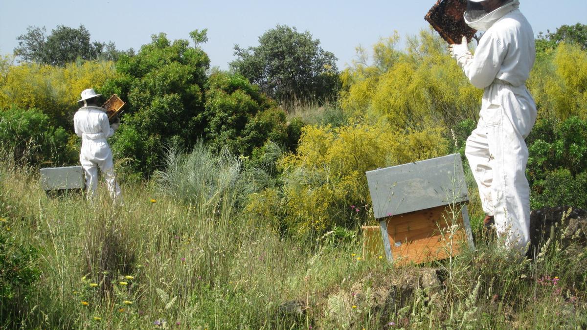 Dos apicultores andaluces