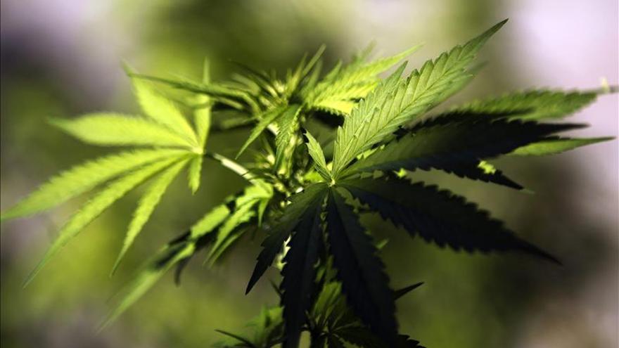 """Un documental explica """"el porqué"""" de la legalización del cannabis en Uruguay"""