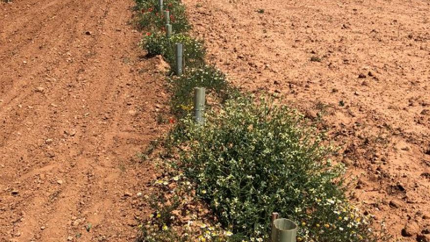 Cuando reutilizar toallas de hotel promueve la sostenibilidad en el sector agrario