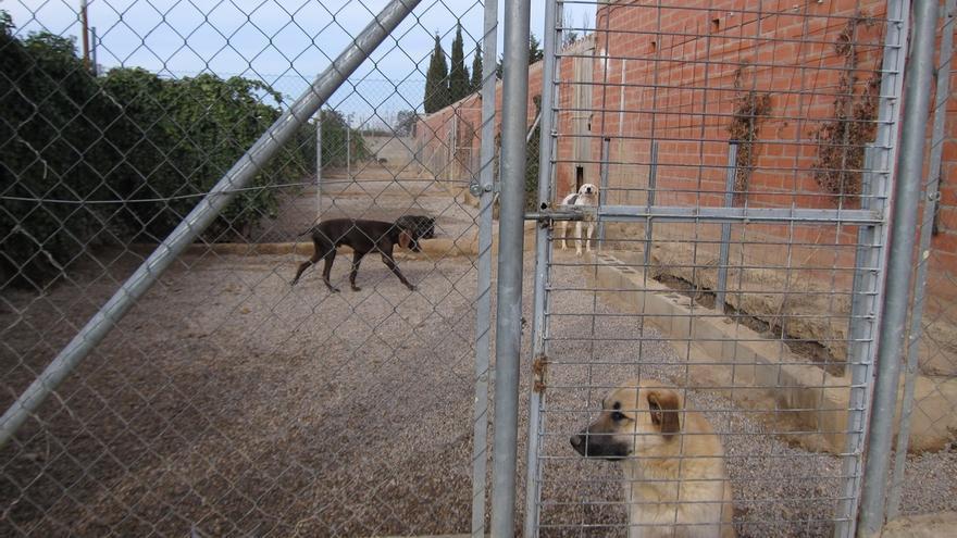 """El Pacma teme el """"sacrificio de 50 perros"""" en Lora tras la adjudicación de la recogida de animales abandonados"""