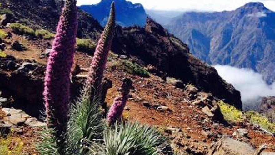 Imagen de archivo del Parque Nacional de La Caldera de Taburiente.