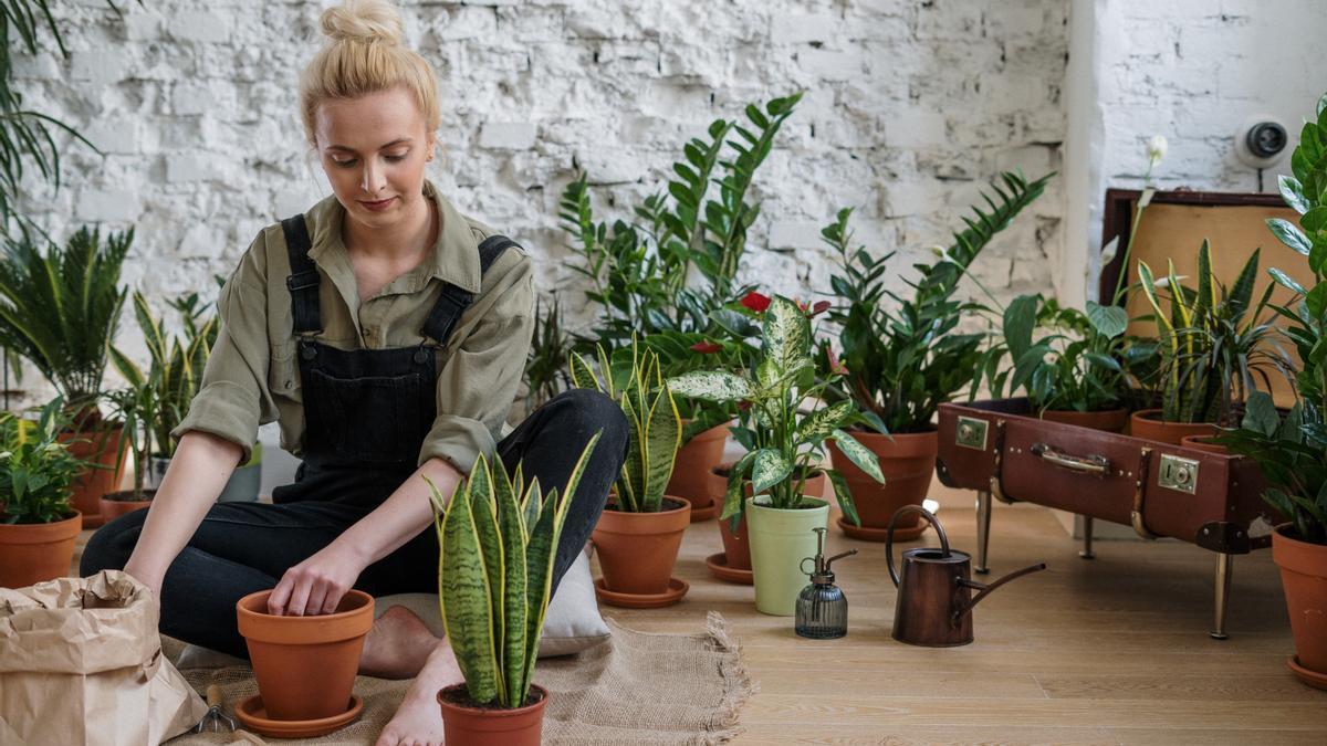 Por qué deberíamos dejar de utilizar tierra de jardinería con turba