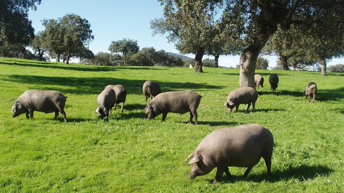 Extremadura se postula como destino seguro.