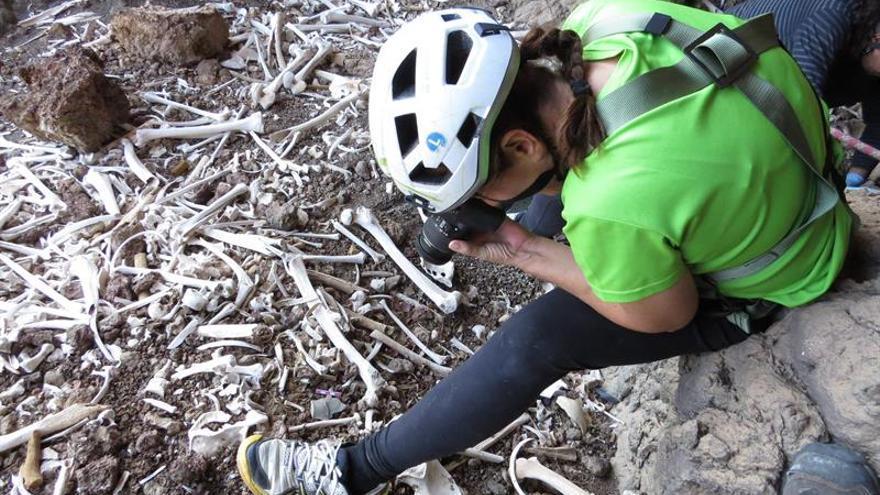 Un grupo de aficionados ha descubierto en Gran Canaria una cueva funeraria de tiempos prehispánicos con restos entre 70 y 80 personas.