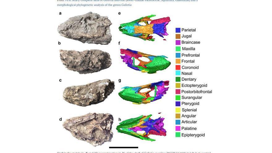 Imágenes del cráneo estudiado con rayos x