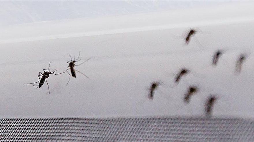 Francia registra su primera muerte vinculada con el virus del zika