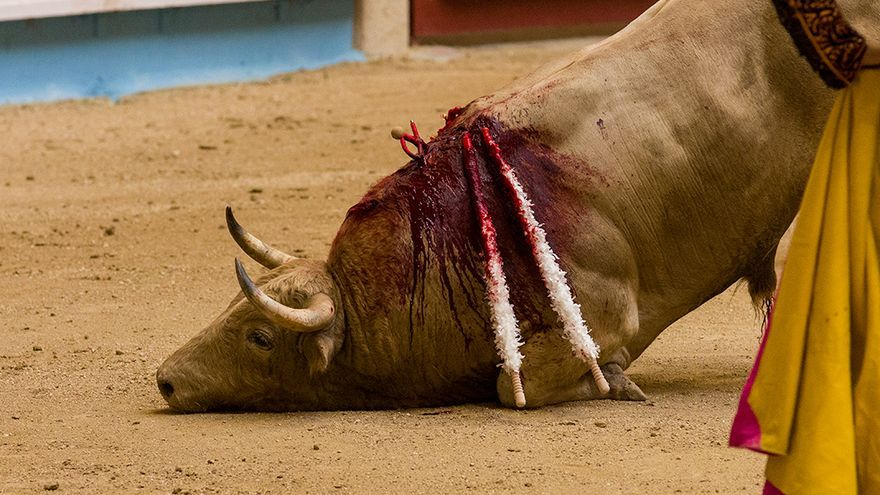 El toro no muere tras las estocada sino que agoniza durante minutos e incluso a veces se levanta. Foto: colectivobritches.com