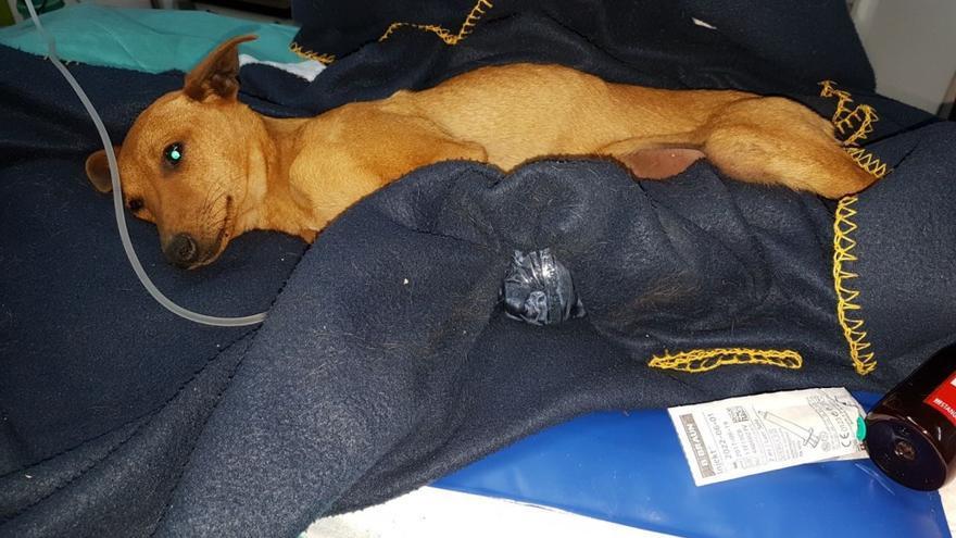Caso de maltrato animal en Albacete