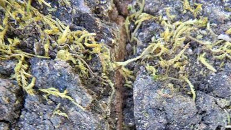 Roble Grande Solana Barrado Jerte zanja hendidura veneno herbicida