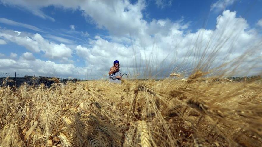 La ONU subraya el aumento del hambre por tercer año consecutivo por el clima