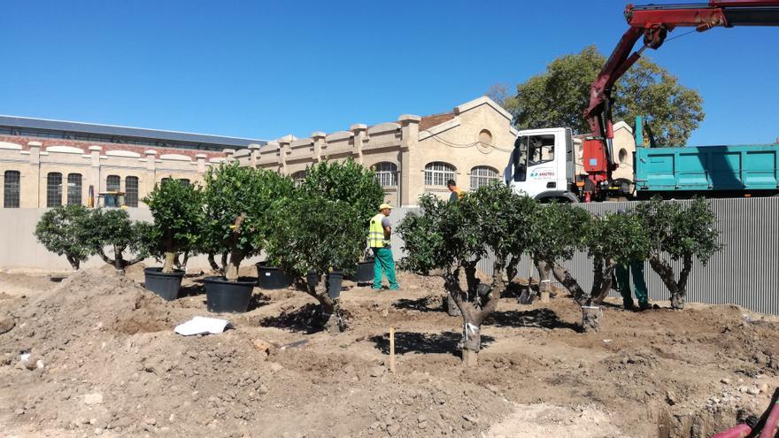 Los técnicos plantan varios ejemplares en el Parque Central.