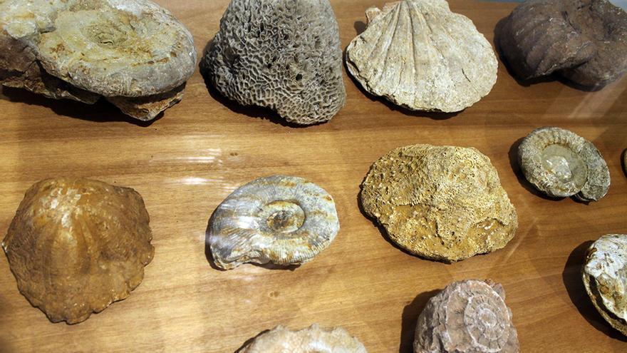 Restos fósiles en Cabra (Córdoba). / Juan Miguel Baquero