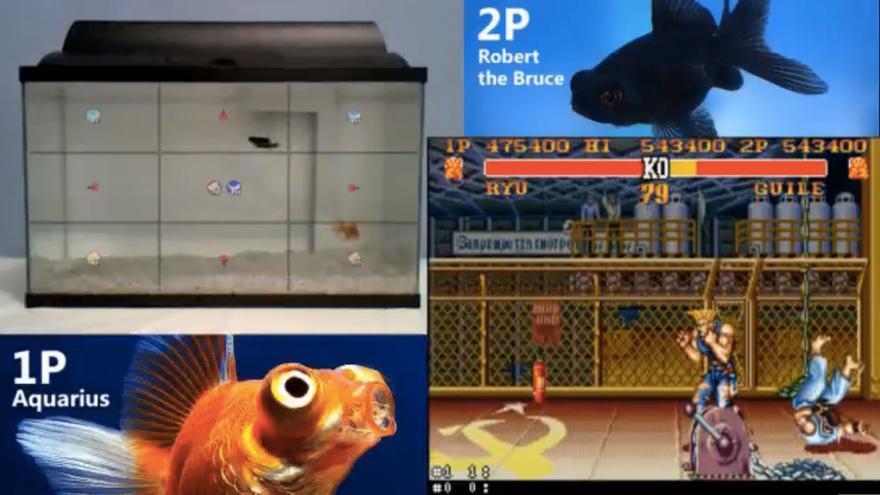 Dos peces luchan al Street Fighter II