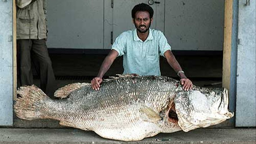 Perca del Nilo del documental La pesadilla de Darwin (2004)