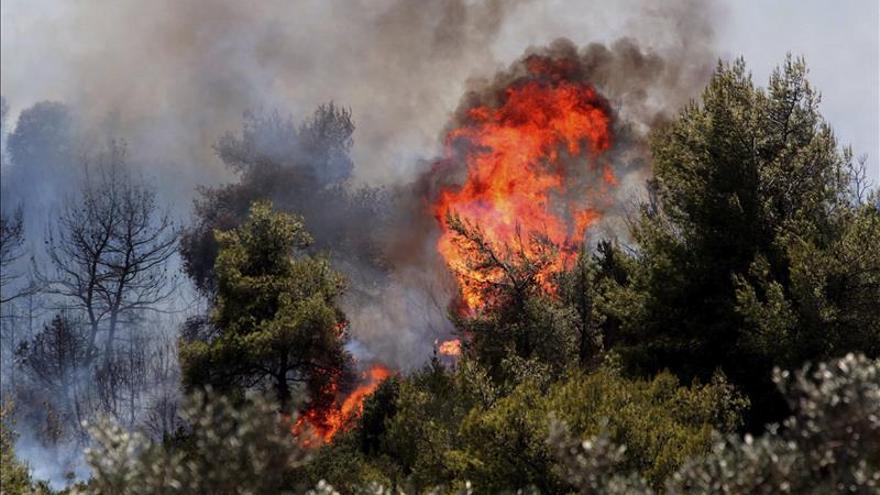 Ascienden a 15.000 hectáreas de bosque arrasadas en incendio en el sur argentino