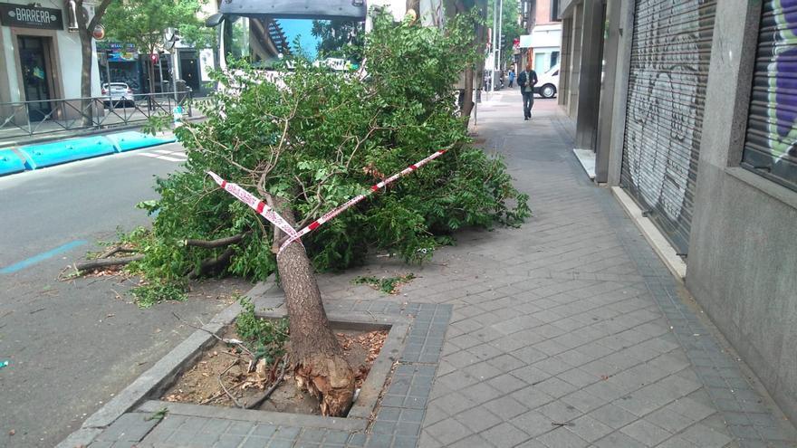El árbol caído por el viento en la calle Fernández de los Ríos | SOMOS CHAMBERÍ