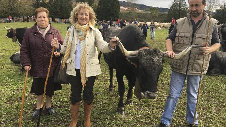 Más de 2.000 cabezas de ganado participan en la concentración de Arenas de Iguña