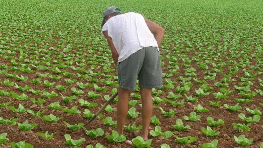 La renta media de los agricultores valencianos no llega  los 9.000 euros anuales