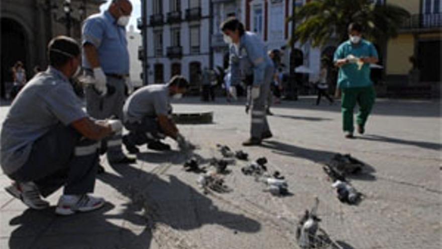Trabajadores del servicio de Salud Ambiental del Ayuntamiento en la plaza Santa Ana. (ACFI PRESS)