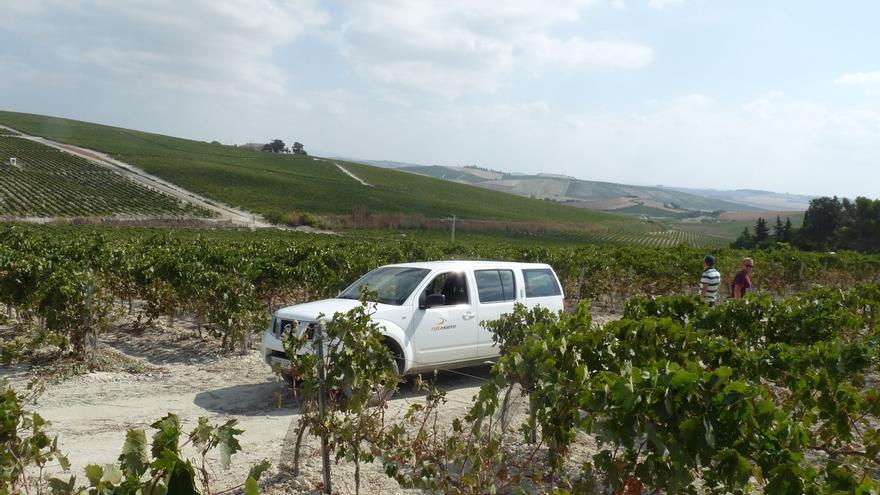 Cinco formas originales de conocer el vino de Jerez todo el año