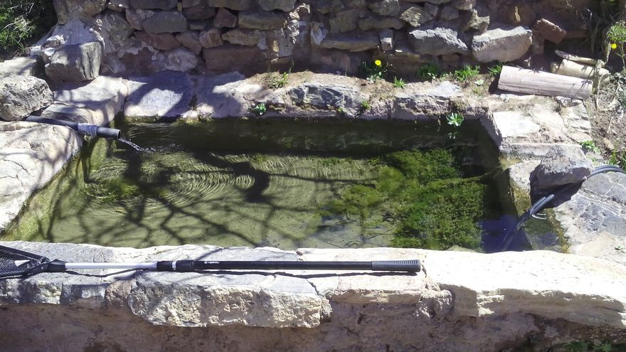 Anfibios en Sierra Espuña