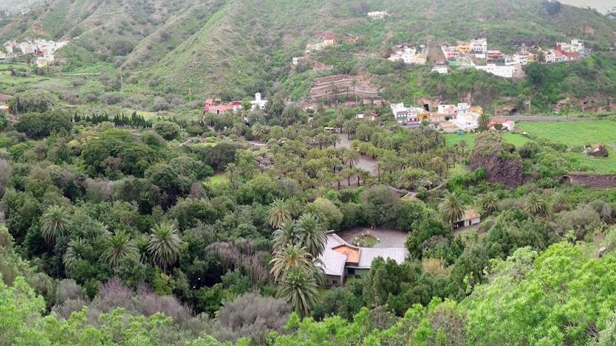 Vistas de las palmeras del Jardín Canario