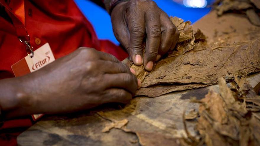 Las exportaciones de empresa mixta cubana de tabaco crecen un 3,5% en 2017