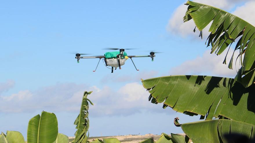 Dron sobrevolando un cultivo de plataneras. (Cedida a Canarias Ahora).