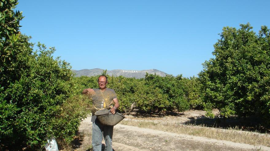 Lechiguero, en su campo de Sueca.