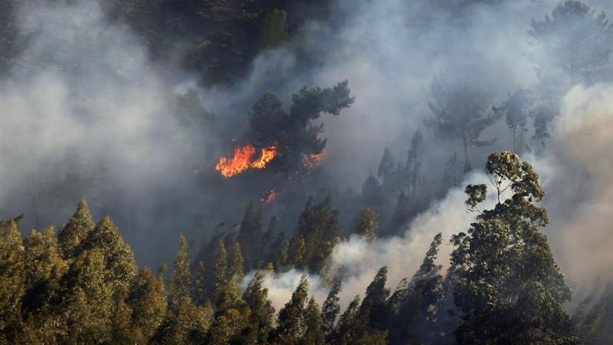 Asturias sufrió 254 incendios en 52 de sus 78 municipios en una semana