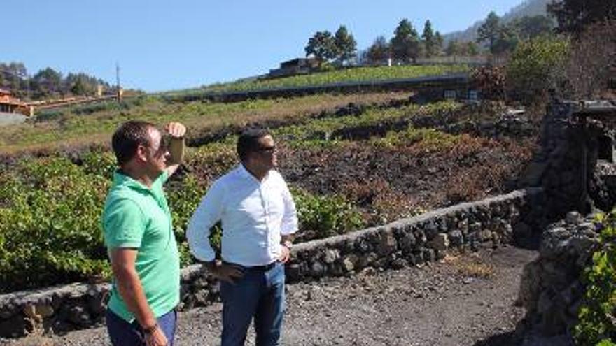 Un momento de la visita realizada a la zona de viñedos de Las Manchas, en el municipio de El Paso.