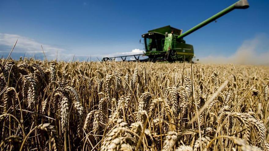 Los precios de los alimentos subieron en febrero impulsados por el trigo