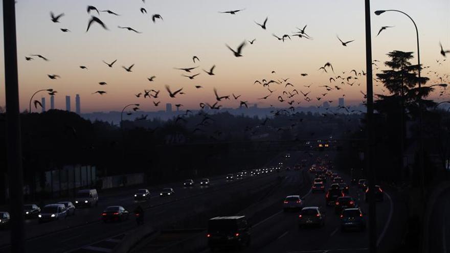 Becerril: No solo hay que prohibir la circulación para reducir la contaminación