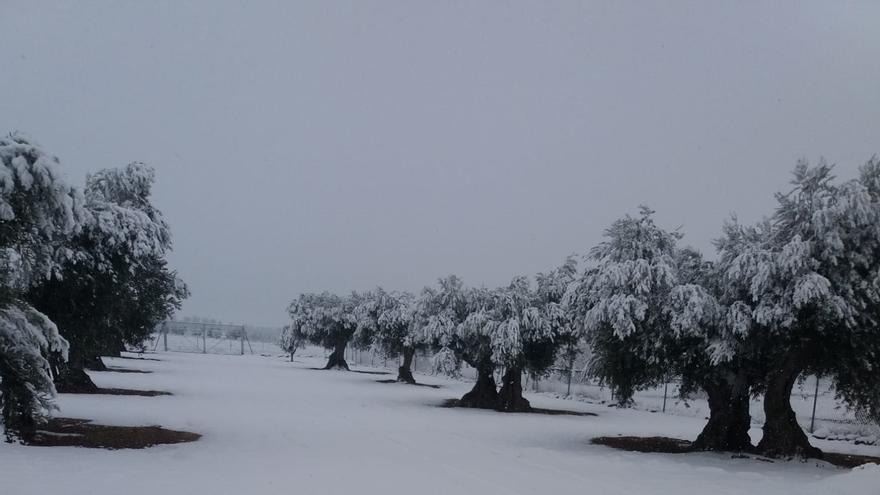 Campo nevado durante el temporal 'Filomena'