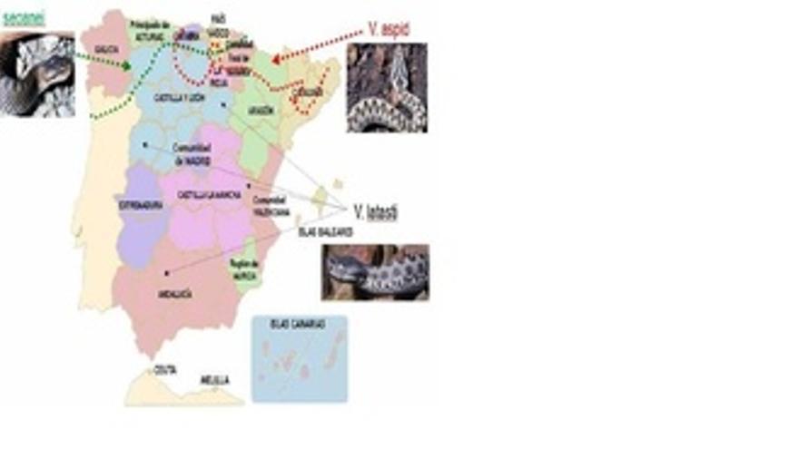 Mapa De La Distribución De Víboras En España