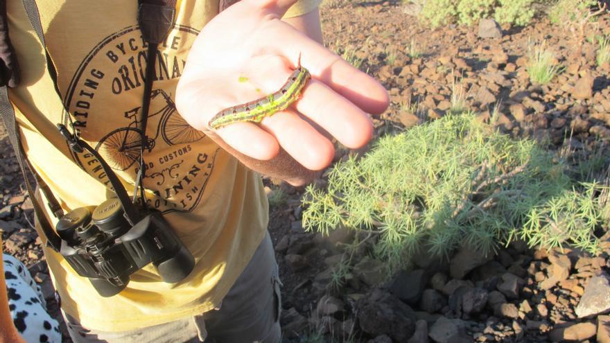 Un alumno de Artenara enseña un insecto