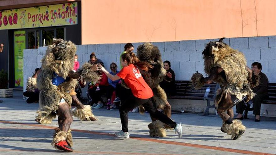 """Más de cuarenta """"carneros"""" al sonido de cascabeles alertaron hoy a los asistentes a La Frontera, en El Hierro."""