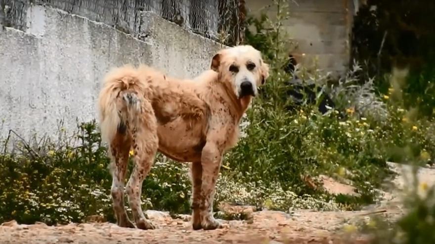 Perro abandonado PACMA
