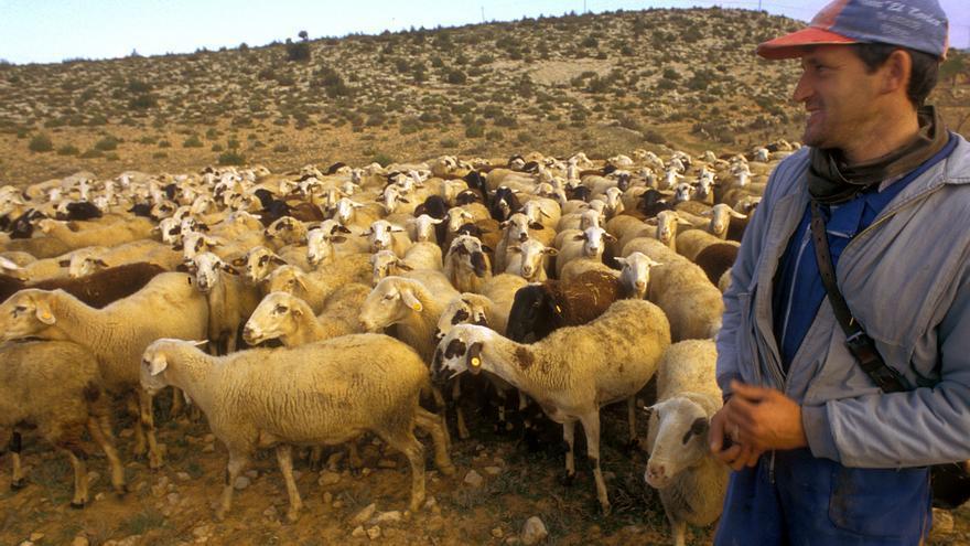 El pastoreo recibirá ayudas para colaborar en la limpieza de los bosques