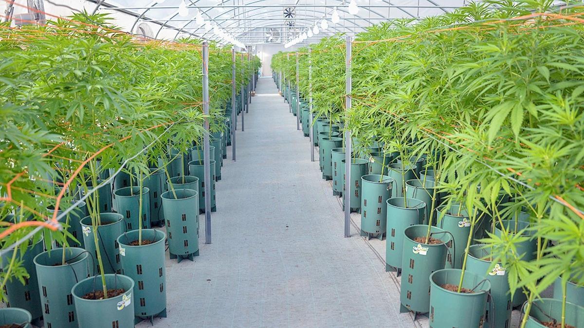 """Se desarrolla el """"Primer Congreso Internacional Cannabis y Desarrollo Productivo""""."""
