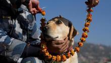 Nepal adora a los perros con guirnaldas y comida en la fiesta hindú de Tihar