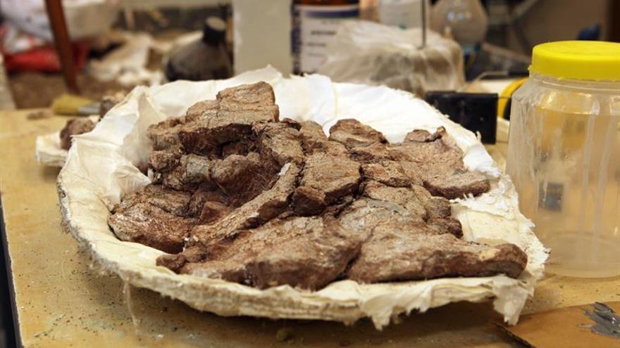 Identifican cinco especies de tetrápodos surgidas al final del devoniano, hace 358 millones de años