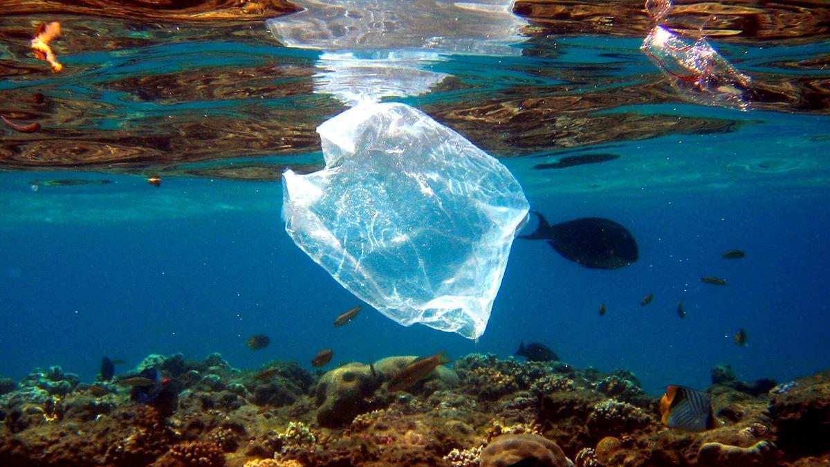 Peces nadan alrededor de una bolsa de plástico en el mar. EFE/Archivo/Mike Nelson/Archivo