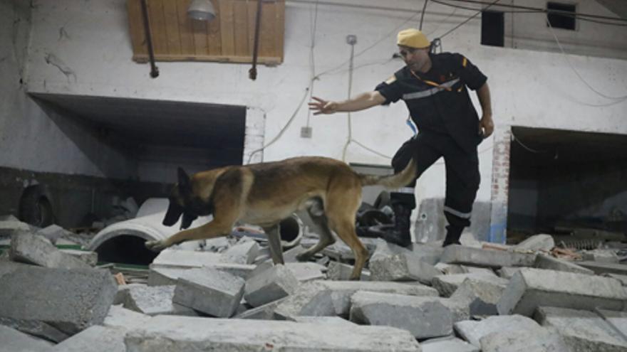 El perro Nick, en una imagen publicada en la web oficial de la UME