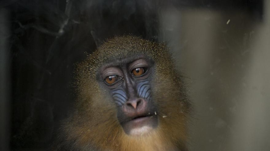 Zoo de Barcelona  Foto: Tras los Muros