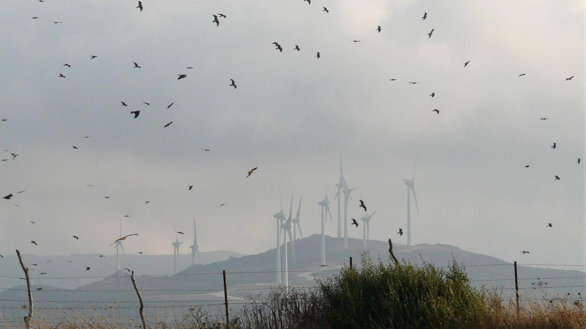 Los parques eólicos se han convertido en una de las más potentes nuevas amenazas para las aves.