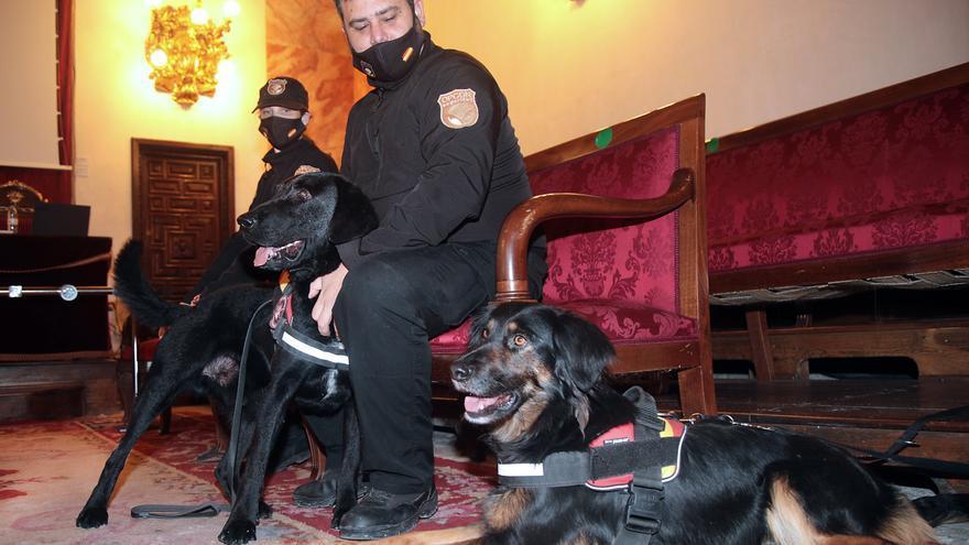 Un estudio piloto con perros para detección de covid-19 valida 96 % de casos