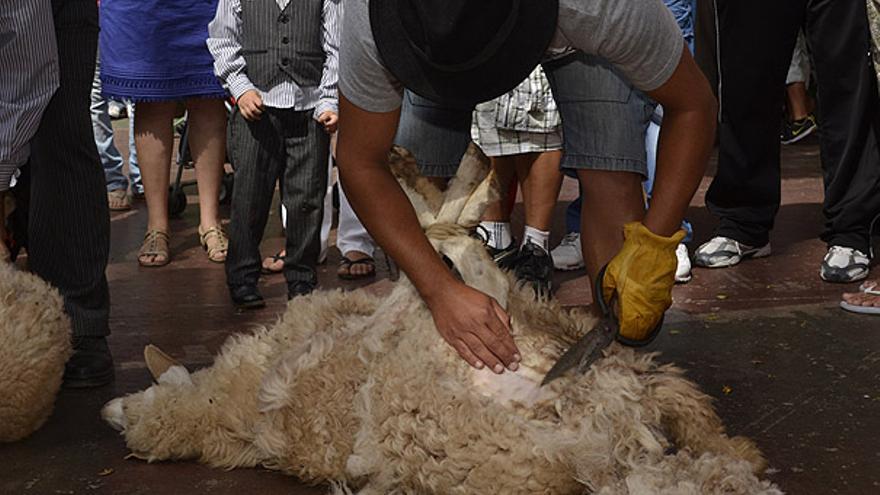 Del trasquilado de ovejas #7