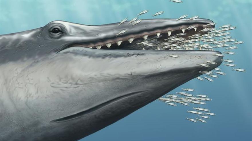 Un fósil de una ballena prehistórica da claves sobre su evolución