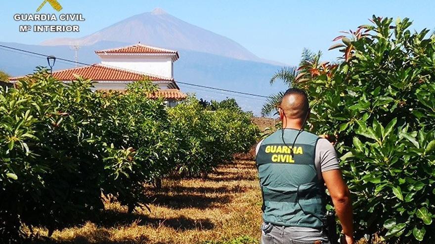 Finca en la que se han robado aguacates en el norte de Tenerife